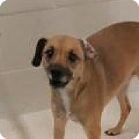 Adopt A Pet :: Macy - Fort Smith, AR