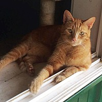 Adopt A Pet :: Oliver - Transfer, PA