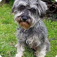 Adopt A Pet :: Frieda - Los Angeles, CA