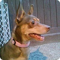 Adopt A Pet :: Bones - Las Vegas, NV