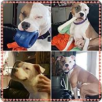 Adopt A Pet :: Rosie - Anchorage, AK