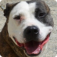 Adopt A Pet :: Rose - Allentown, NJ