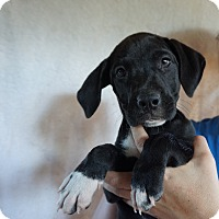 Adopt A Pet :: Addison - Oviedo, FL