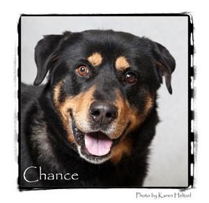 Rottweiler Mix Dog for adoption in Warren, Pennsylvania - Chance