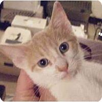 Adopt A Pet :: Hans - Kensington, MD
