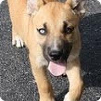 Adopt A Pet :: Lily Gale - Staunton, VA