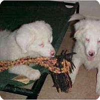 Adopt A Pet :: Rebekah - Mesa, AZ