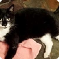 Adopt A Pet :: Livia - Vancouver, BC