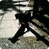 Adopt A Pet :: Rachel - Antioch, IL