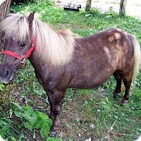 Adopt A Pet :: Gypsy - Dewey, IL
