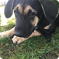Adopt A Pet :: Parker - San Diego, CA