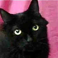 Adopt A Pet :: Lenoir - LaJolla, CA