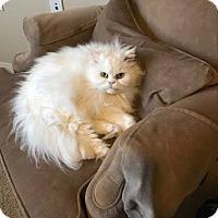 Adopt A Pet :: Eden - DFW Metroplex, TX