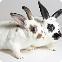 Adopt A Pet :: Cookie & Peanut - Kingston, ON