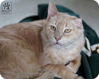 Domestic Longhair Cat for adoption in Lancaster, Massachusetts - Bobby