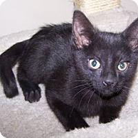 Adopt A Pet :: K-Guffey2-Kendall - Colorado Springs, CO