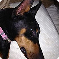 Adopt A Pet :: Megan - spring valley, CA