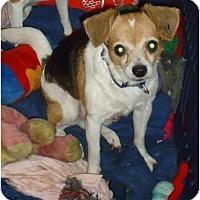Adopt A Pet :: Clyde - Toronto/Etobicoke/GTA, ON