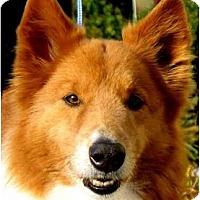 Adopt A Pet :: MAURY - Wakefield, RI