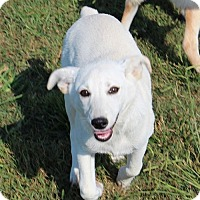 Adopt A Pet :: Lakely - Brattleboro, VT