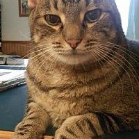 Adopt A Pet :: J.D. - Saranac Lake, NY