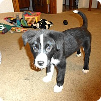 Adopt A Pet :: Hotshot - Midwest (WI, IL, MN), WI