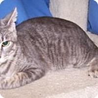 Adopt A Pet :: K-Ls6-Lucky - Colorado Springs, CO