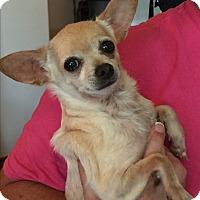 Adopt A Pet :: Perkins - Blanchard, OK