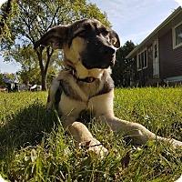 Adopt A Pet :: LATTE - Winnipeg, MB