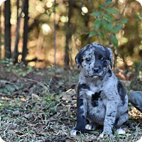 Adopt A Pet :: Lizzie - Groton, MA