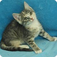 Adopt A Pet :: Betty - Elkhorn, WI