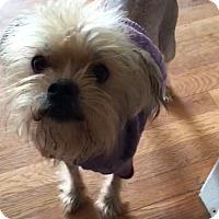 Adopt A Pet :: Rosco - Manassas, VA