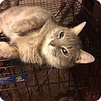 Adopt A Pet :: Irish - Baltimore, MD