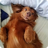 Adopt A Pet :: Charlie - Woonsocket, RI