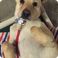 Adopt A Pet :: Tuffy - Traverse City, MI