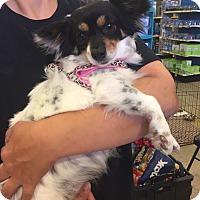 Adopt A Pet :: Destiny - Brea, CA