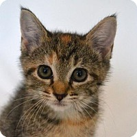 Adopt A Pet :: Bazinga - Savannah, GA