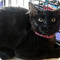 Adopt A Pet :: Tut - Seminole, FL