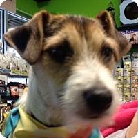 Adopt A Pet :: Freckles-pending adoption - Omaha, NE