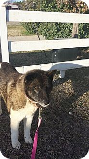 Akita Dog for adoption in Toms River, New Jersey - Duchess