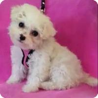 Adopt A Pet :: Claire - Covina, CA