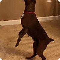 Adopt A Pet :: Eden--Athens, see video! - McDonough, GA