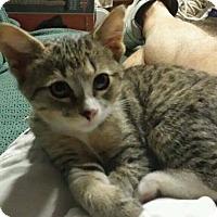 Adopt A Pet :: Axel - Warner Robins, GA