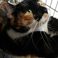 Adopt A Pet :: Big Momma Bella - Lakeland, FL