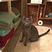 Adopt A Pet :: Arthur - Modesto, CA