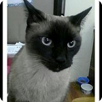 Adopt A Pet :: Sinatra - Trevose, PA