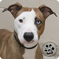 Adopt A Pet :: Zoey - Troy, OH