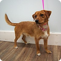 Adopt A Pet :: Clyde - Hagerstown, MD