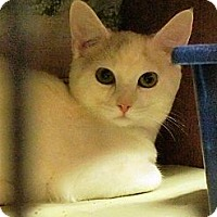 Adopt A Pet :: Hailey - Ocean City, NJ