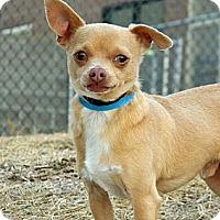 Adopt A Pet :: Oscar - Cheyenne, WY